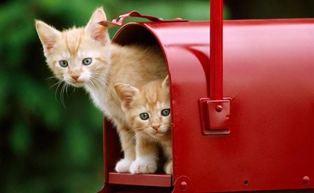 gattini-posta