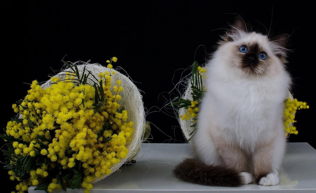 gatto5