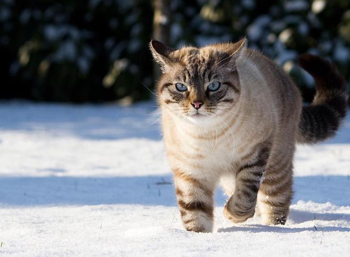 neve-espositori