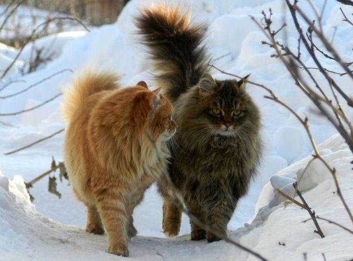 neve-visitatori